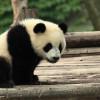 pandas for data analysis