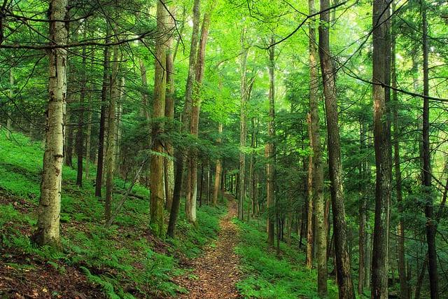 Bagging and Random Forest Ensemble Algorithms for Machine Learning