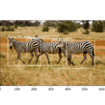 Photograph of Three Zebra Each Detected with the YOLOv3 Model and Localized with Bounding Boxes