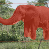 Photograph of an Elephant With All Objects Detected With a Bounding Box and Mask